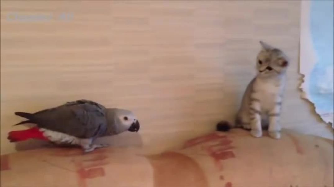 Funny cats vs birds.mp4